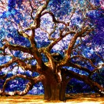 Tree with the Blue Leavesphoto by: Jason Shory